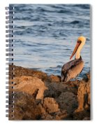 Pelican On The Rocks Spiral Notebook