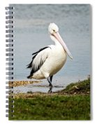 Pelican Pose Spiral Notebook