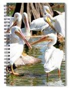 Pelican Squabble Spiral Notebook