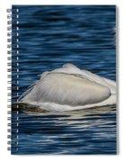 Pelican Wake Spiral Notebook