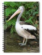 Pelican With A Bird Park In Bali Spiral Notebook
