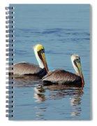 Pelicans 2 Together Spiral Notebook