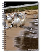 Pelicans At Pearl Beach 1.0 Spiral Notebook