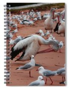 Pelicans At Pearl Beach 3.0 Spiral Notebook