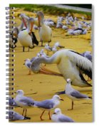 Pelicans At Pearl Beach 3.1 Spiral Notebook
