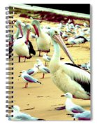 Pelicans At Pearl Beach 4.1 Spiral Notebook