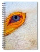 Pelican's Eye Spiral Notebook