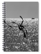 Pelicans Flying By - Black And White Spiral Notebook