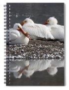 Pelicans Spiral Notebook