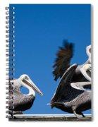 Pelicans Take Flight Spiral Notebook