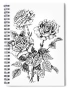 Pen And Ink Roses Spiral Notebook