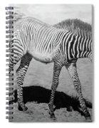 Penda Spiral Notebook
