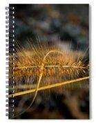 Fountain Pennisetum In Evening Sun Spiral Notebook