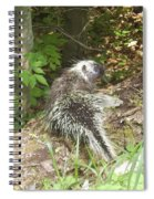 Pennsylvania Porcupine Spiral Notebook
