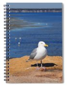 Pensive Seagull Spiral Notebook