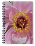 Peonie In Pink Spiral Notebook
