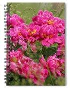 Peonies Spiral Notebook
