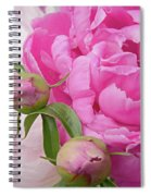 Peony Pair In Pink And White  Spiral Notebook