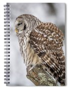 Perched Barred Owl Spiral Notebook