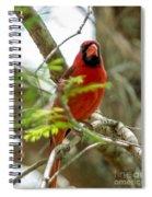 Perched Cardinal Spiral Notebook