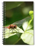 Perched Dragonfly Spiral Notebook