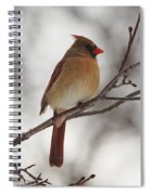 Perched Female Red Cardinal Spiral Notebook