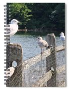Perched Gulls Spiral Notebook