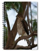 Perched Hawk Spiral Notebook