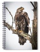 Perched Juvenile Eagle Spiral Notebook