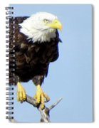 Perched On A Tree Spiral Notebook