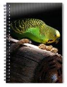 Perched Parakeet Spiral Notebook