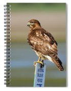 Perched Red Tail Hawk Spiral Notebook