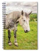Percherons Horses Spiral Notebook
