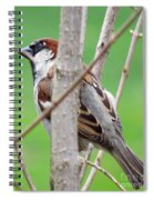 Perching Sparrow Spiral Notebook