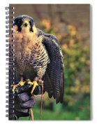 Peregrine Falcon Spiral Notebook