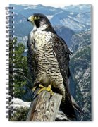 Peregrine Falcon, Yosemite Valley, Western Sierra Nevada Mountain, Echo Ridge Spiral Notebook