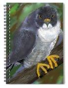 Peregrine Spiral Notebook