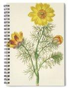 Perennial Adonis Spiral Notebook