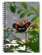 Perfect Set - Butterfly Spiral Notebook