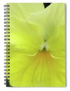 Perfectly Pansy 07 Spiral Notebook