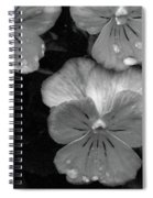 Perfectly Pansy 12 - Bw - Water Paper Spiral Notebook