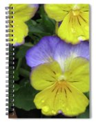 Perfectly Pansy 12 Spiral Notebook