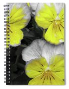 Perfectly Pansy 13 - Bw - Yellow Spiral Notebook