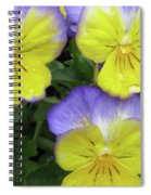 Perfectly Pansy 13 Spiral Notebook