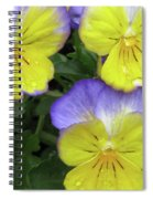 Perfectly Pansy 14 Spiral Notebook