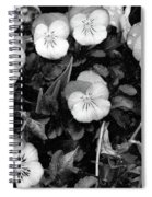 Perfectly Pansy 18 - Bw - Water Paper Spiral Notebook