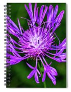 Perfectly Purple Spiral Notebook