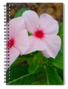 Periwinkle Flower 2 Spiral Notebook