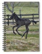 Perry's Colt Running Spiral Notebook