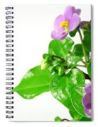 Persian Violets Spiral Notebook